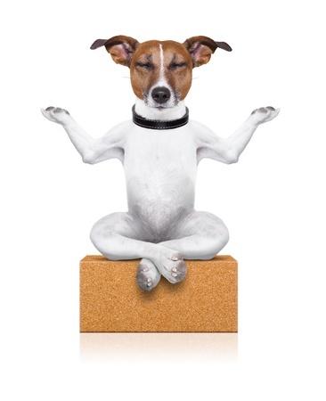 Dog meditating